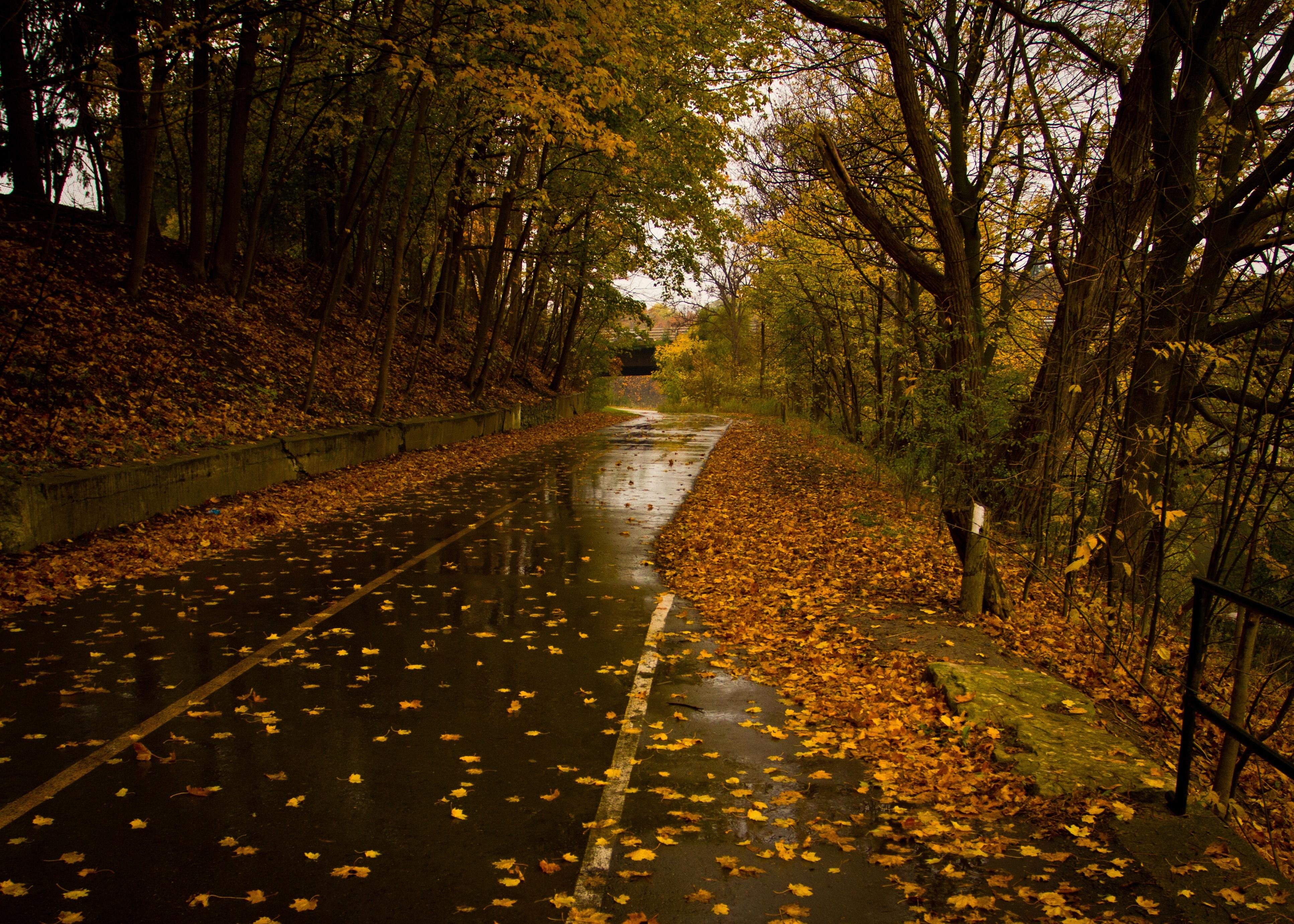 wet_leaves_on_road.jpg