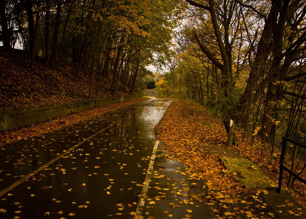 wet_leaves_on_road.jpg